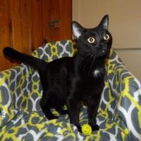 Adopt A Pet :: Ruffles - BATH, NY