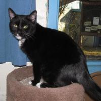 Adopt A Pet :: TARYN - Inverness, FL