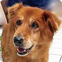 Adopt A Pet :: Punkin - BIRMINGHAM, AL