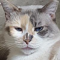 Adopt A Pet :: Thora - Orlando, FL