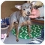 Photo 1 - Chihuahua/Chinese Crested Mix Dog for adoption in Bloomsburg, Pennsylvania - Lola & Princess