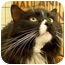 Photo 2 - Domestic Longhair Cat for adoption in Troy, Michigan - Komin