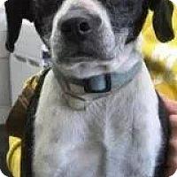 Adopt A Pet :: Kelly - Albert Lea, MN