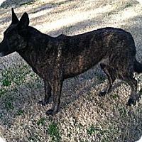 Adopt A Pet :: Diana in MI - Jamestown, CA