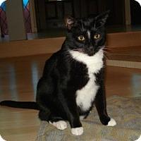 Adopt A Pet :: Theo - Cranford/Rartian, NJ