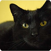Adopt A Pet :: Doris - Lunenburg, MA