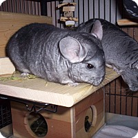 Adopt A Pet :: Micky & Minnie - Avondale, LA