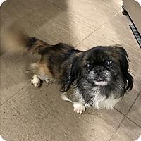Adopt A Pet :: TINKER - SO CALIF, CA