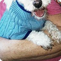 Adopt A Pet :: Frankie - Treton, ON