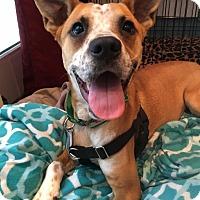 Adopt A Pet :: Johnny Cash - Jersey City, NJ