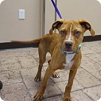 Adopt A Pet :: Tonka - Oviedo, FL