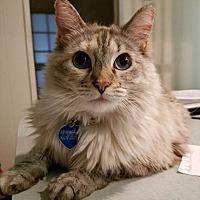 Adopt A Pet :: Anabel - Idyllwild, CA