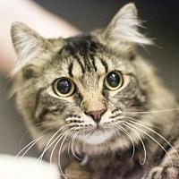 Adopt A Pet :: Johnny - Mountain Home, AR