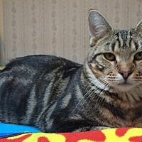 Adopt A Pet :: Jon - Middletown, NY