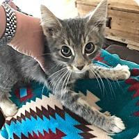 Adopt A Pet :: Barney - Aurora, CO