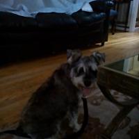 Adopt A Pet :: Shultz - Charlotte, NC