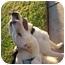 Photo 1 - Labrador Retriever/Husky Mix Dog for adoption in Malibu, California - PALOMA