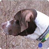 Adopt A Pet :: Neville - Columbus, OH