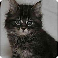 Adopt A Pet :: Thor - Cincinnati, OH