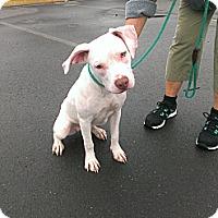 Adopt A Pet :: Willow - Berlin, CT