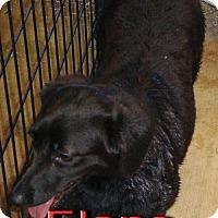 Dachshund Mix Dog for adoption in Coleman, Texas - Elaine