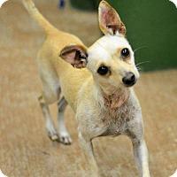 Adopt A Pet :: Hope - Alvarado, TX