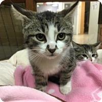 Adopt A Pet :: Paige - Medina, OH