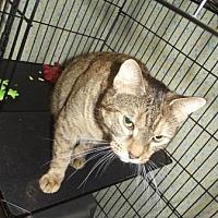 Adopt A Pet :: SARAH - Suffolk County, NY