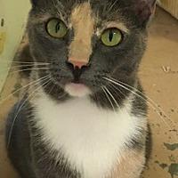 Adopt A Pet :: Sasha - Temecula, CA