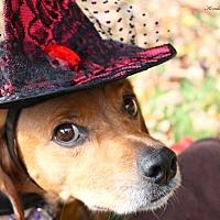 Adopt A Pet :: Reba - Saranac Lake, NY
