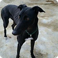 Adopt A Pet :: Reba - Swanzey, NH