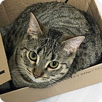 Adopt A Pet :: Cassiopeia - Vancouver, BC