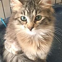 Adopt A Pet :: Bunny - Hammond, LA