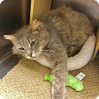 Adopt A Pet :: Foggy - Colmar, PA