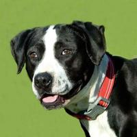 Adopt A Pet :: Zarlena - Glen Allen, VA
