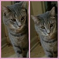 Adopt A Pet :: Libby - Shelbyville, KY