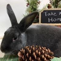 Adopt A Pet :: Licorice - Dayton, OH