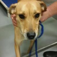 Adopt A Pet :: Honey - Savannah, TN