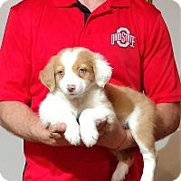 Adopt A Pet :: Minnie - New Philadelphia, OH