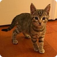 Adopt A Pet :: Tucker - Centreville, VA