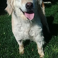 Adopt A Pet :: Helen - Washington, DC