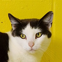 Adopt A Pet :: Houdini - Salem, WV