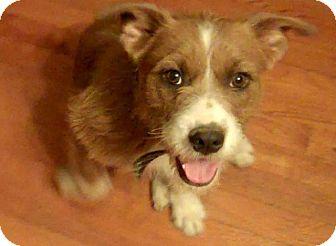 Terrier (Unknown Type, Medium) Mix Dog for adoption in Hillsville, Virginia - Marley