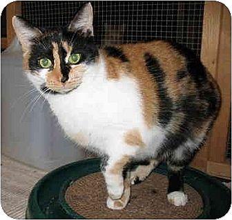 Calico Cat for adoption in Cincinnati, Ohio - Becky