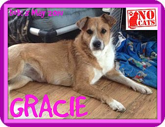 Wirehaired Fox Terrier/Terrier (Unknown Type, Medium) Mix Dog for adoption in Mount Royal, Quebec - GRACIE