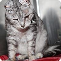Adopt A Pet :: Jack (Neutered) - Marietta, OH