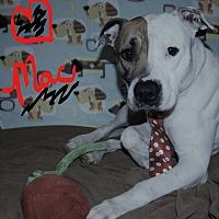 Adopt A Pet :: Mac - Waupaca, WI