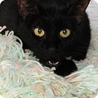 Adopt A Pet :: Phoebe - Titusville, FL