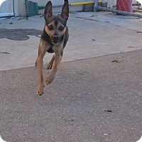 Adopt A Pet :: Moo Goo Gai Pan - Meridian, ID