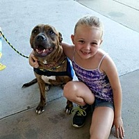 Adopt A Pet :: Gretta - Philadelphia, PA
